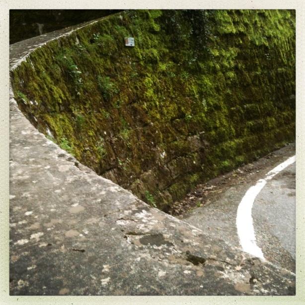 Шумски пут